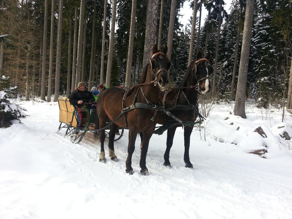 Unsere Pferdeschlitten erlauben zwischen 2 und 7 Personen eine schöne Fahrt durch das verschneite Mühlviertel.