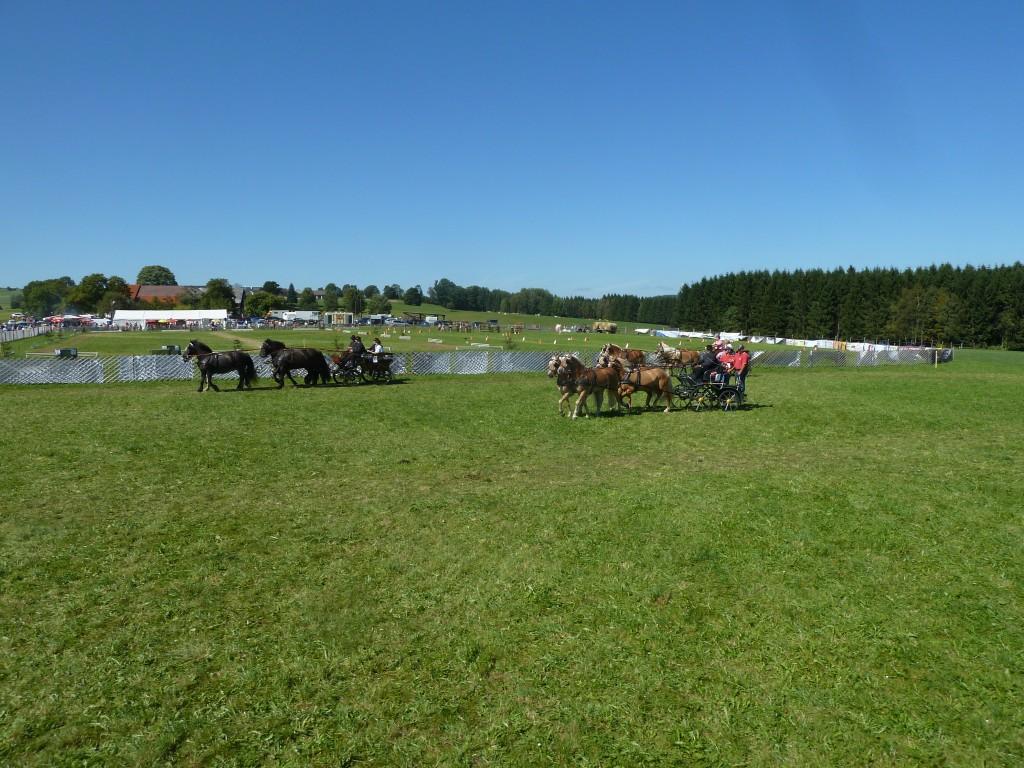 Das Gespannfahrertreffen 2012 des Reit- und Fahrverein Bad Leonfelden in Ortschlag